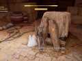 Assassin's Creed® Origins_20171112114818