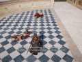 Assassin's Creed® Origins_20171120092424